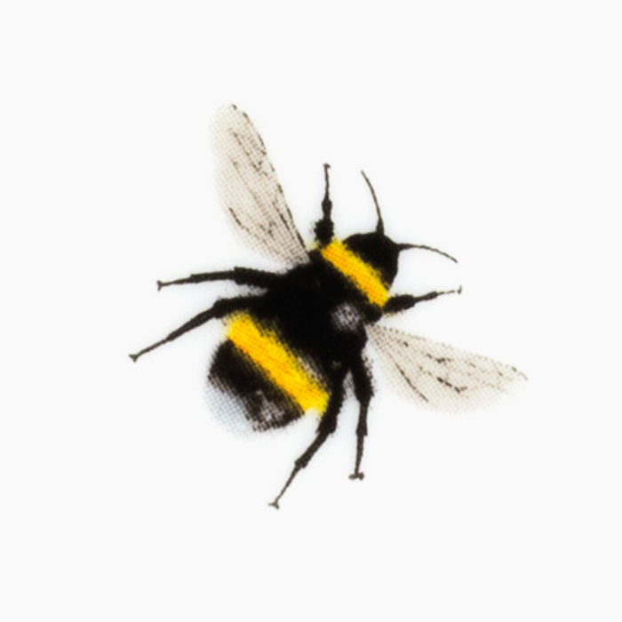 white tailed bumblebee print with yellow bee banding